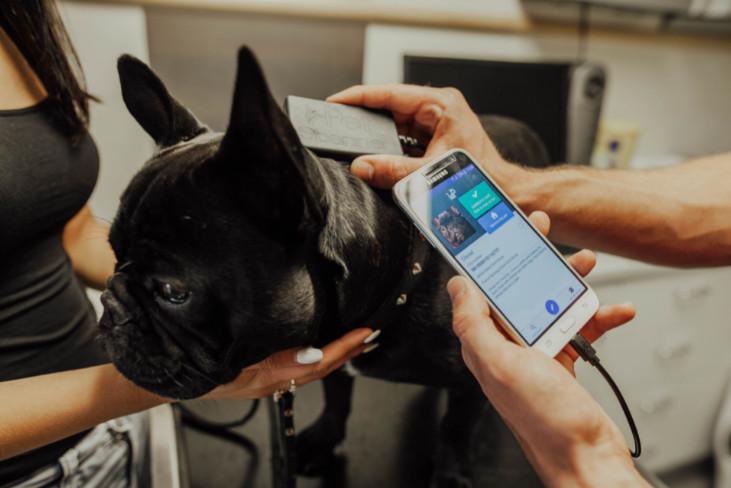 Dog Microchip Tracker 2