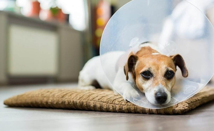 Elizabethan Collar for Dogs Function and the Reasons You Should Buy One