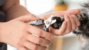 Petsmart dog nail clipping
