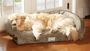 Temperpedic Dog Bed Options for Your Lovely Puppy