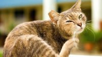 Treating Mange in Cats Appropriately by Knowing the Cause and Symptoms