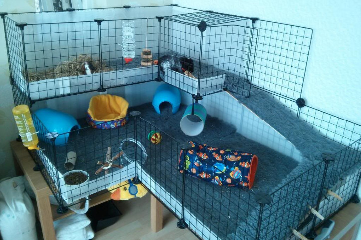 extra large guinea pig cages indoor