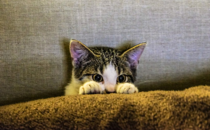 heartworm signs in cats