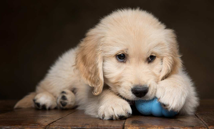Dog Chewing Paws Treatment that You Can Do at Home