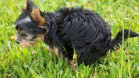 Dog Poop Runny, Is My Dog Sick